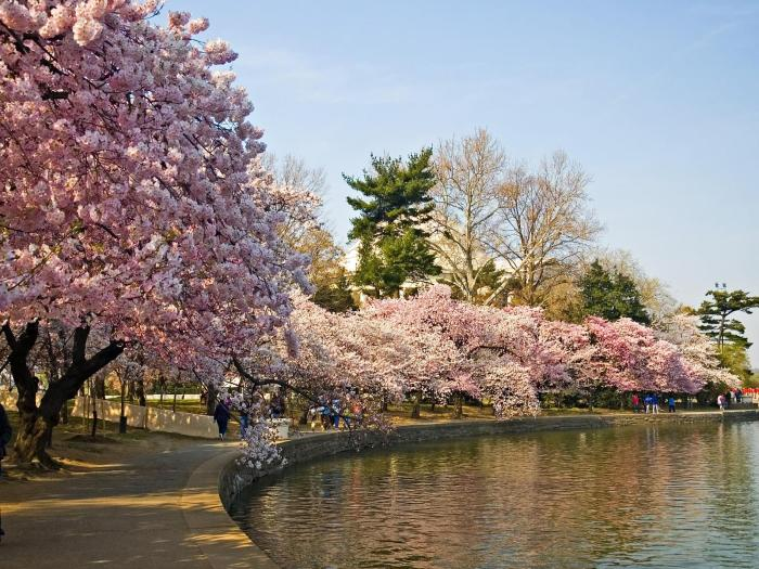 http://hdnaturepictures.com/wp-content/uploads/2013/05/Sakura-Lake-In-Summer-Desktop.jpg