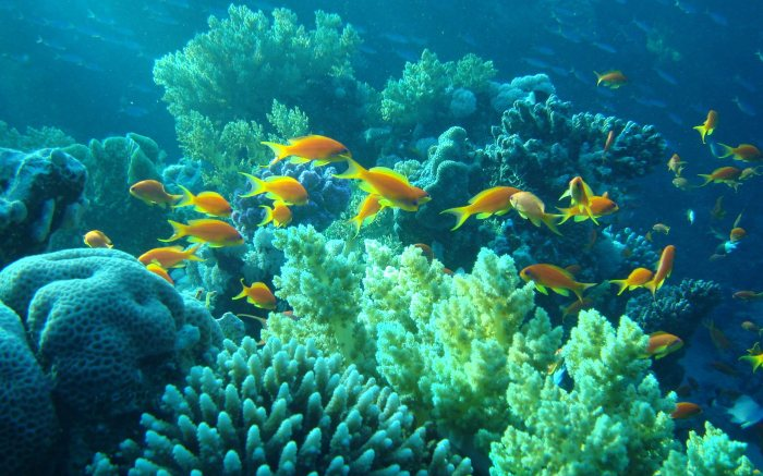 Foto Ilustrasi dari http://wallpict.com/coral-reef-wallpaper-5964.html